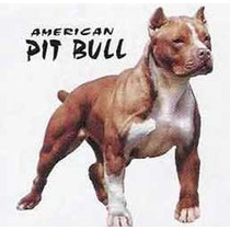 Educação Do Pit Bull Em Dvd- Frete Grátis!!!