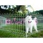 Cerca Cor Branco Pet Canil Cães Coelho Cão -6 Lados- Jardpet