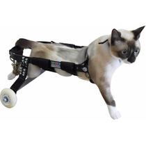 Cadeira De Rodas Para Gatos Grandes E Pequenos Sob Medida Sp