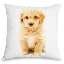 Almofada Poodle - Coleção Love Dogs - 2126