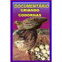 Documentário Criando Codornas + Chocadeira + Ovoscópio!!!