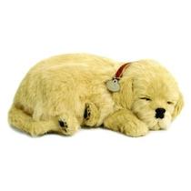 Filhote Perfect Petzzz Cachorro Golden Retriver Que Respira