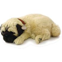 Filhote Cachorro Pug Que Respira Perfect Petzzz