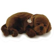 Filhote Cachorro Labrador Chocolate Q Respira Perfect Petzzz