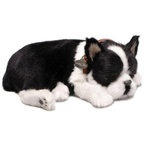 Filhote Cachorro Boston Terrier Que Respira Perfect Petzzz