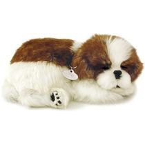 Filhote Cachorro Shih Tzu Que Respira Perfect Petzzz
