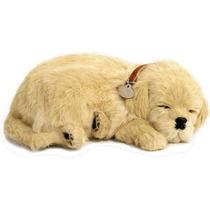 Cachorro Golden Retriever Que Respira Perfect Petzzz Pelúcia