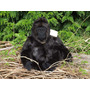 Gorila Africano Rei Grande Pelucia De Luxo Rara Nova Macaco
