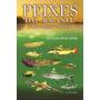 Peixes Do Brasil De Rios, Lagoas E Riachos - Etson Bini