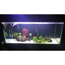Aquario Completo C/ Peixes Canister Aquecedor E + 350 Litros