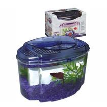 Aquário Para Peixes Betta - Kit Roxo Pequeno
