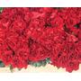 10 Buque Com 12 Botões De Rosas Vermelha Festas,decoração