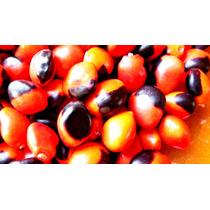 Olho De Cabra-sementes - 500gr