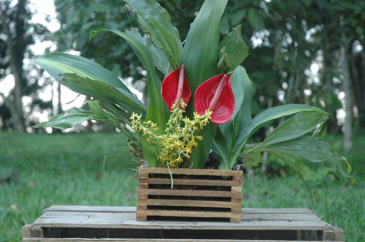 #8D2329 Cachepot De Madeira porta Vaso vaso Para Orquídeas. R$ 4 49 no  1200x797 px caixas de madeira para orquideas @ bernauer.info Móveis Antigos Novos E Usados Online