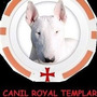 Filhotefilhotes Bull Terrier Inglês Canil Royal Templars
