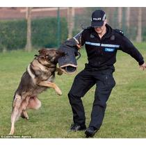 Adestramento De Cães Em 3 Dvds, Para Todos Os Cães Cachorro
