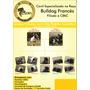 Bulldog Francês (excelente Genética) - 3 Machos E 2 Fêmeas