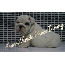 Perfeitas Tourinhas Filhotes Fêmea Branca De Bulldog Inglês
