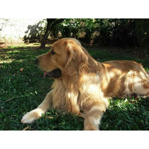 Reservas De Golden Retriever