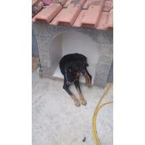 Doação Rottweiler Em Campo Grande!