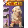 Cães & Cia Nº 329 Shar Pei Lhasa Apso Com Poster