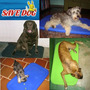 Cama Plástica Resistente Para Cães Destruidores * Save Dog *
