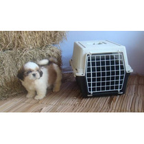 Caixa Transporte Ferplast Cachorro Gato Casa Cama N.1 Nova