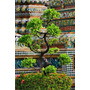 Poster (37 X 55 Cm) Bonsai Tree In Front Of Chedi Wat Pho