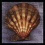 Poster (30 X 30 Cm) Blush Rose John Golden