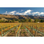 Poster (65 X 43 Cm) Vineyard And Pisa Range Cromwell Central