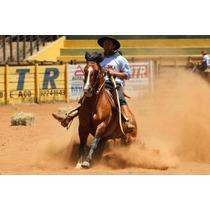 Cavalo Crioulo, Machos E Fêmeas De Todas As Idades.