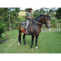 Cavalo Lusitano Baio Em Cotia