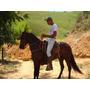 Cavalo Mangalarga,vende Cobertura Oriz Bavaria,pai Campeão