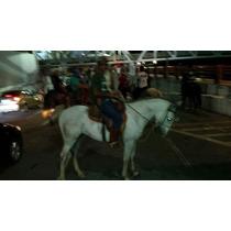 Cavalo Mangalarga 5 Anos