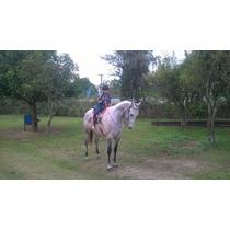 Cavalo Quarto De Milha Com Ingles