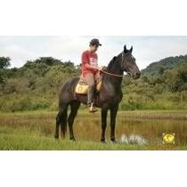 Cavalo Mangalarga Marchador Marcha Picada - 20 Pgtos