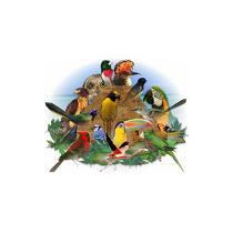 Cd Cantos De Pássaros Original Frete Grátis Imperdível !!!
