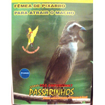 Canto Do Pixarro Femea P Esquentar O Macho - Cd