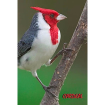 150 Cantos De Pássaros: Sabiá, Juriti Curió Canário Cacatua
