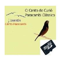 Ensino Canto Paracambi Filhotes Curió 1 (sd)
