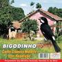 Cd Canto Pássaros Bigodinho Clássico Mateiro Com Repetição