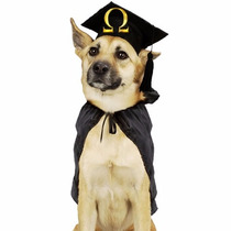 Método Como Adestrar Cães / Cachorro