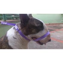 Coleira Para Adestramento Canino Tam. M