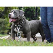 Coleira Couro Com Spikes Cães Pitbull Bull Terrier #skc2