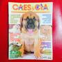 Cães E Cia - Mastiff