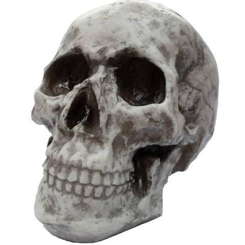 Cranio Caveira Esqueleto - Feito De Resina - Tamanho Real