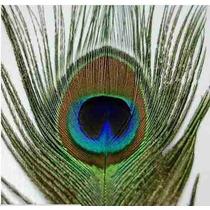 Bellydance - Penas Pavão Natural 25-30cm