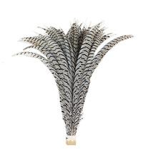 Penas De Faisão (cauda)zebra De 80 A 90 Cm