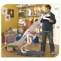 Coleção T-rex Vol. 11 - Construindo Seu Dinossauro