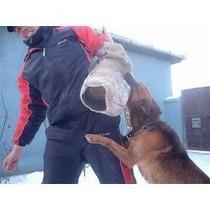 Ebook Adestramento Canino - Cães - Cachorro